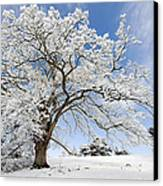Snow Covered Winter Oak Tree Canvas Print by Tim Gainey