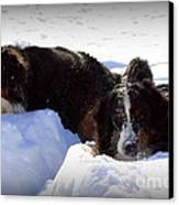 Snow Eaters Canvas Print by Patti Whitten