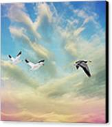 Snow Geese Over New Melle Canvas Print by Bill Tiepelman
