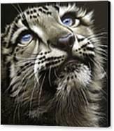 Snow Leopard Cub Canvas Print by Jurek Zamoyski