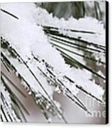 Snow On Pine Needles Canvas Print by Elena Elisseeva