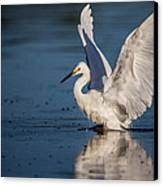 Snowy Egret Frolicking In The Water Canvas Print by Andres Leon
