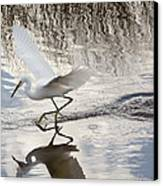Snowy Egret Gliding Across The Water Canvas Print by John Bailey