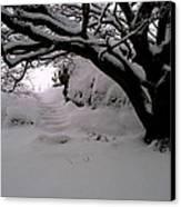 Snowy Path Canvas Print by Amanda Moore