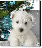 Snowy White Puppy Present Canvas Print by Greg Cuddiford