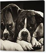 Snuggle Bug Boxer Dogs Canvas Print by Stephanie McDowell