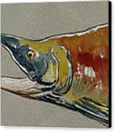 Sockeye Salmon Head Study Canvas Print by Juan  Bosco