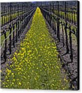 Sonoma Mustard Grass Canvas Print by Garry Gay