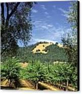 Sonoma Valley Vineyard Canvas Print by Craig Lovell