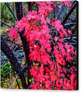 Southern Fall Canvas Print by Chad Dutson