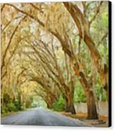 Spanish Moss - Symbol Of The South Canvas Print by Christine Till