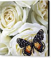 Speckled Butterfly On White Rose Canvas Print by Garry Gay