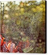 Spider Web Canvas Print by Edward Fielding