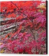 Splendid Fall Canvas Print by Valia Bradshaw