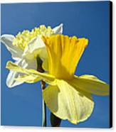 Spring Blue Sky Yellow Daffodil Flowers Art Prints Canvas Print by Baslee Troutman