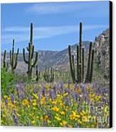 Spring Flowers In The Desert Canvas Print by Elvira Butler