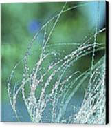 Spring Grass Canvas Print by Artist and Photographer Laura Wrede