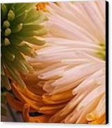 Spring Has Sprung II Canvas Print by Anna Villarreal Garbis