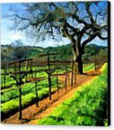 Spring In The Vineyard Canvas Print by Elaine Plesser