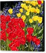 Spring Sunshine Canvas Print by Carol Groenen