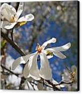 Spring Trees 1 Canvas Print by Allan Morrison