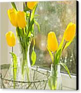 Spring Tulips Canvas Print by Amanda And Christopher Elwell