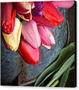 Spring Tulips Canvas Print by Edward Fielding