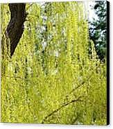 Spring Weeping Willow Canvas Print by Will Borden