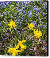 Spring Wildflowers Canvas Print by Elena Elisseeva
