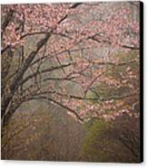 Spring Woods Canvas Print by Patrick Downey