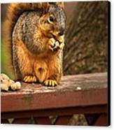 Squirrel Eating A Peanut Canvas Print by  Onyonet  Photo Studios
