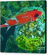Squirrel Fish Canvas Print by John Malone