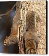 Squirrels Canvas Print by Eric Abernethy