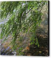 Stalking Trout Canvas Print by John Stephens