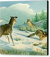 Stand-off  -whitetail Doe And Coyotes Canvas Print by Paul Krapf