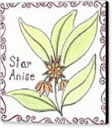 Star Anise Canvas Print by Christy Beckwith