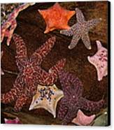 Starfish Variety 5d24133 Canvas Print by Wingsdomain Art and Photography