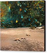 Starry Beach Night Canvas Print by Betsy C Knapp