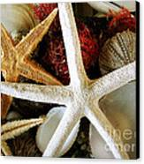 Stars Of The Sea Canvas Print by Colleen Kammerer