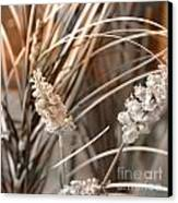 Stems IIi Canvas Print by Yanni Theodorou