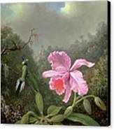 Still Life With An Orchid And A Pair Of Hummingbirds Canvas Print by Martin Johnson Heade