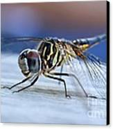 Stop By Tiger Dragon Fly Canvas Print by Peggy  Franz