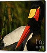 Stork Colors Canvas Print by Adrian Tavano