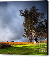 Storm Onto A Vineyard Canvas Print by Boon Mee