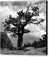 Storm Tree Canvas Print by Tranquil Light  Photography