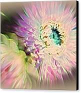 Strawflower Awakening Canvas Print by Shirley Sirois