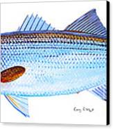 Striped Bass Canvas Print by Carey Chen