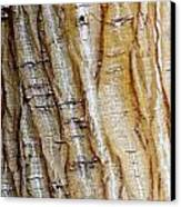 Striped Maple Canvas Print by Steven Ralser
