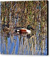 Stunning Shovelers Canvas Print by Al Powell Photography USA