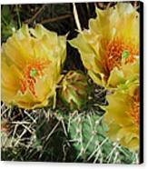 Summer Cactus Blooms Canvas Print by Kae Cheatham